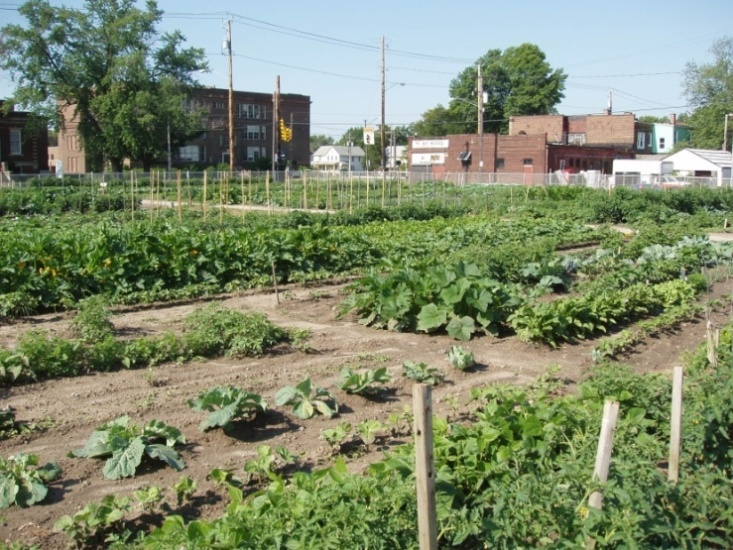 Food Strategy and Policy: Working Toward a Healthier, Hunger